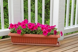 Lovely Flowers on cedar deck