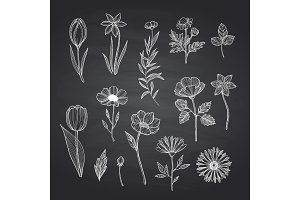 Vector hand drawn flowers set on