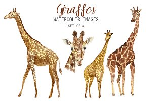 Watercolor Giraffes Clipart