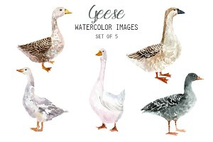 Watercolor Geese Clipart