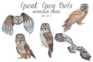 Watercolor Great Grey Owl Clipart