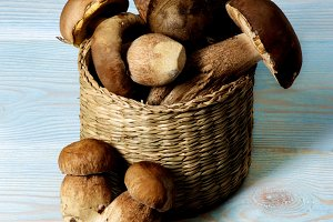 Fresh Boletus Mushrooms