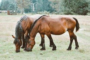 Beautiful horses in a field