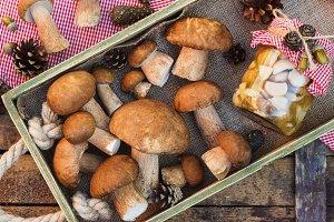 Raw white mushrooms, pine cones and