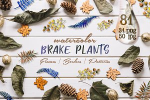 Brake plants PNG watercolor set