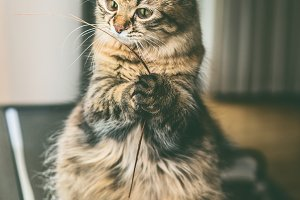 Funny cat sits on its hind legs