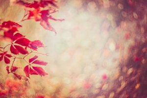 Autumn red leaves and foliage bokeh