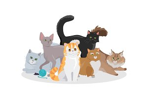 Cats Breeds Flat Vector Web Banner