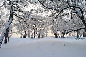 City Park in Winter After Snowfall.
