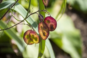 Glowing Seed Pods