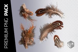 5 FEATHER PNG IMAGES
