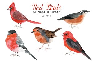 Watercolor Red Birds Clipart