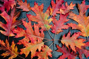 Fall Leaves Red Orange Maple