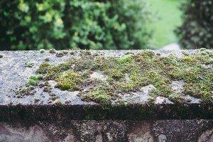 Moss on a concrete wall