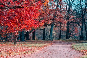 Fantasy scene of red foliage and pat