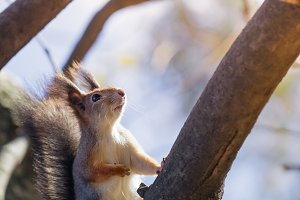 Portrait of a squirrel on a tree