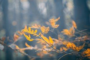 Macro photography of rowan branch