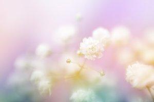 White flower on blur background.