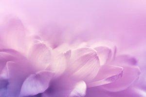 Soft focus flower background