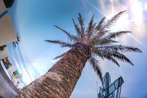 Palm from Rimini Beach, Italy
