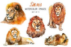 Watercolor Lions Clipart