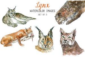 Watercolor Lynx Clipart
