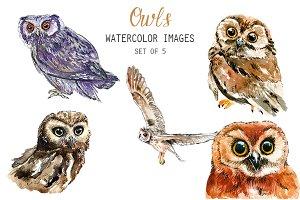 Watercolor Owls Clipart
