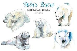 Watercolor Polar Bear Clipart