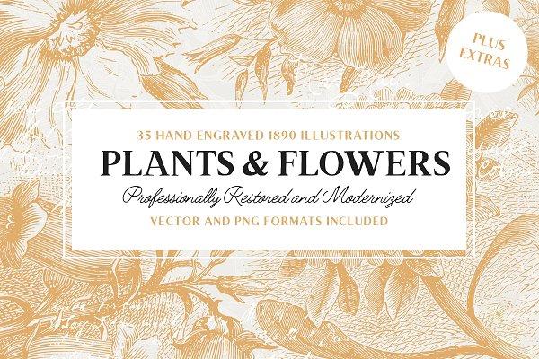 35 Vintage Flower Illustrations