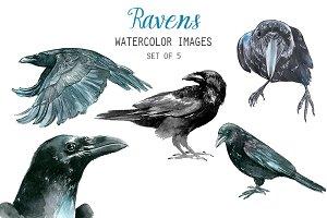Watercolor Ravens Clipart