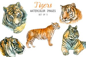 Watercolor Tigers Clipart