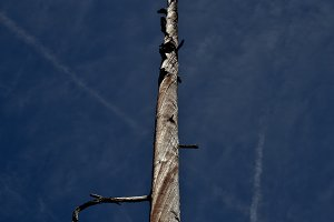 Dried tree II
