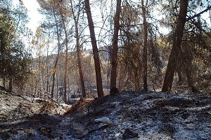After the wildfire