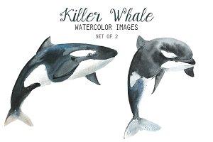 Watercolor Killer Whale Clipart