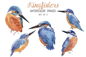 Watercolor Kingfisher Clipart