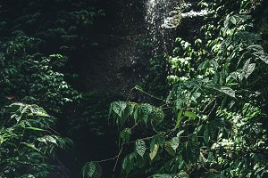Waterfall in jungle rainforest of