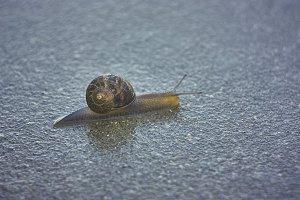 snail, husk