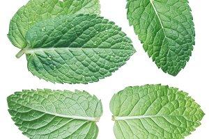 Set of spearmint leaves or mint leav