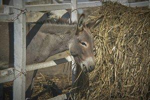Good appetite donkey