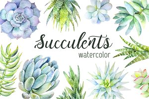Succulents watercolor set