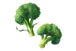 Broccoli Pencil Illustration