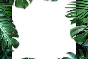 Tropical leaves and white paper