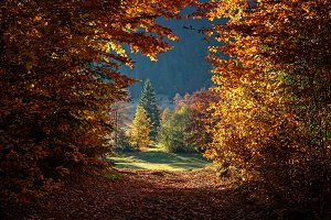 Autumn tree in forest