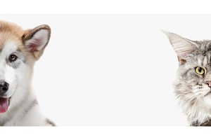 Funny image of a dog and cat looking