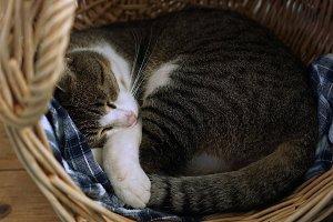 felix in the basket