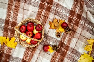 Checkered brown plaid, basket with a