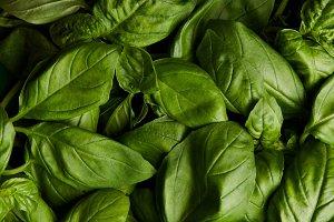 full frame shot of ripe green basil