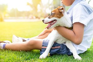 jack russell dogs with a boy relaxin