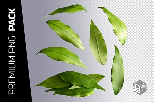 7 LAYERS – PACK OF LYCHEE LEAVES IMA