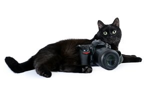 Funny black cat is photographer